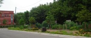 July 2010 Gateway Garden Grows