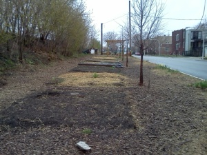April 2011 - Raised beds removed for Balmoral Bridge Construction