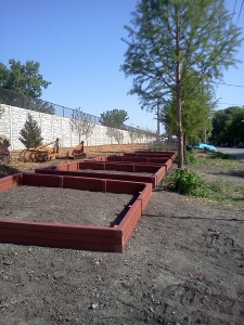 May 2014 - Veggie Beds Restored - Thank You!