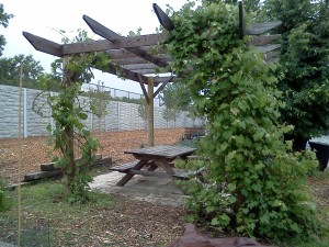 June 2014 at Gateway Garden Pergola