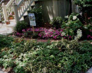 Diana's garden #2