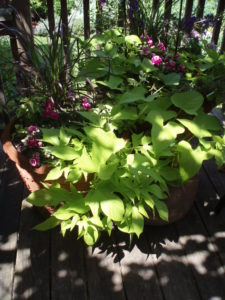 Diana's garden 3