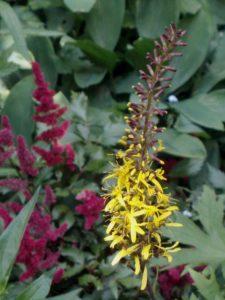 Diana's garden 4
